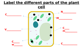 Animal Cell, Plant Cell, Bacterial Cell Label Worksheets ...
