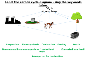 The carbon cycle label worksheets differentiated by zmzb the carbon cycle label worksheets differentiated ccuart Choice Image