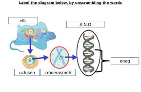 Chromosome gene dna diagram label worksheets differentiated by chromosome gene dna diagram label worksheets differentiated ccuart Image collections