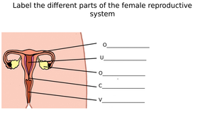 Male & Female Reproductive System Diagram Label Worksheets (Differentiated)