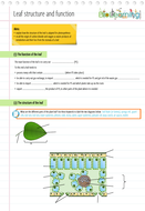 Leaf Structure - Worksheet (KS3/KS4) | Teaching Resources