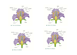 Ks3 plant reproduction by ng97 teaching resources tes diagram of a labelled flowerc ccuart Image collections