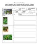 Plant-Classification-Sheet.docx
