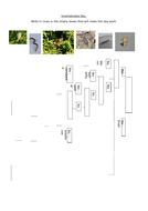 Invertebrates-Key.docx