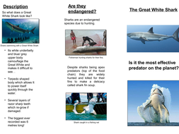 Predator Topic-a  leaflet about the Great White Shark good and bad examples designed on PPT