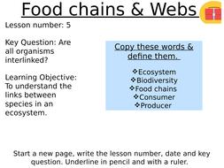 Food webs & Food chains