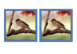 Bird matching pairs game - flash cards, displays