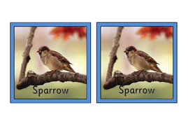 Bird-matching-pairs-with-names.pdf