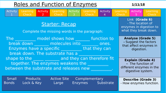 Aqa 9 1 gcse roles and functions of enzymes organisation by aqa 9 1 gcse roles and functions of enzymes organisation ccuart Choice Image