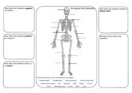 skeleton and joints lesson and worksheet - Skeleton Worksheet