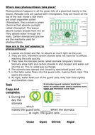 Leaf-adaptations-grade-3--5.docx