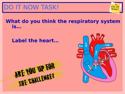 5.-Pathway-of-air-through-the-respiratory-system.ppt