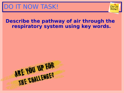 6.-Role-of-the-respiratory-muscles-in-breathing.ppt