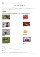 Which-Beak-is-Best-Experiment-Worksheet.docx