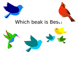 Bird-Beak-Experiment-PowerPoint.pptx