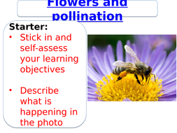 Flowers and pollination ks3 by sabanm teaching resources tes flowers and pollination ks3 ccuart Image collections
