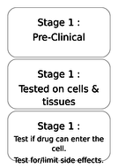 Stages-of-Development.doc