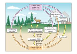 Cycle-diagrams.docx