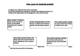 Malaria-life-cycle.docx