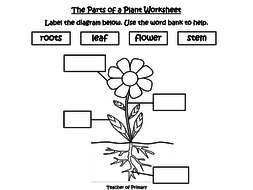 Plants year 3 by onlineteachingresources teaching resources tes plants year 3pdf ccuart Image collections