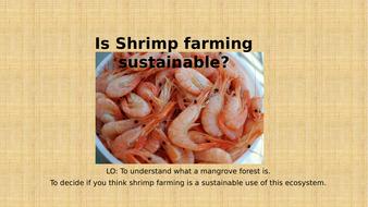 Theme 3 - Lesson 8 - Is Shrimp farming sustainable?