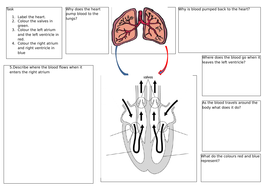 the-circulatory-system.docx