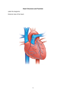 Heart-structure-and-function-for-teacher-presentation-2003.doc