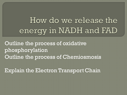 Electron-Transport-chain.pptx