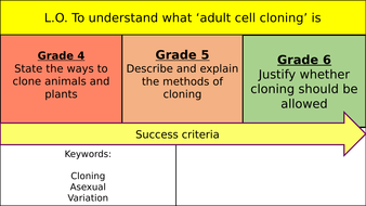 Adult Cell Cloning