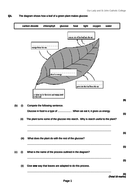 The Leaf and Photosynthesis
