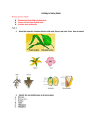 Getting to know plants- Assessment questions with rubrics