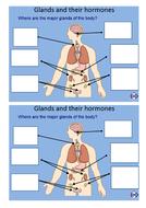 Glands-and-hormones.docx