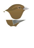 Three-bird-heads.docx