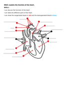 Heart-labelling-diagram.docx