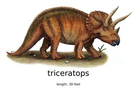 triceratops-length-printable.docx