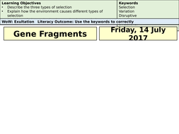 Lesson-7---Gene-Fragments.pptx