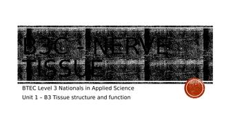 B3c---Nerve-Tissue.pptx