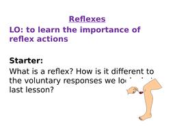 AQA Biology GCSE New Specification Reflexes