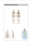 e.g-Skeletal-System.png