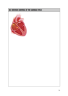 e.g-Cardiovascular-System.png