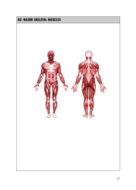 e.g-Muscular-System.png