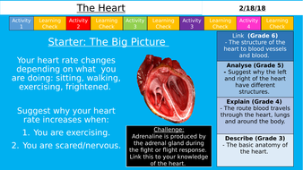 NEW AQA GCSE (9-1) - The Heart & Dissection