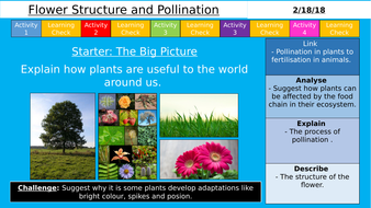 New aqa ks3 flower structure and pollination by sr276 teaching new aqa ks3 flower structure and pollination ccuart Gallery