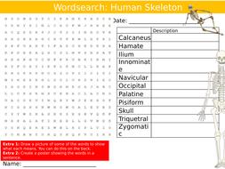 Human Skeleton Wordsearch Puzzle Sheet Keywords Settler Starter Cover Lesson Anatomy PE Biology