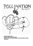 Pollination-handout-and-lesson-plan.docx