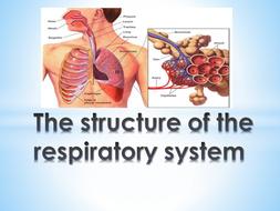 Structure-respiratory.pptx