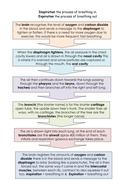 Flow-chart-inspiration-expiration-mechanics-revision.doc