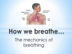 How-we-breath.pptx