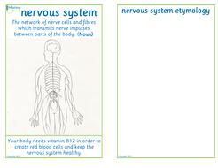 Flashcard-nervous-system.pdf