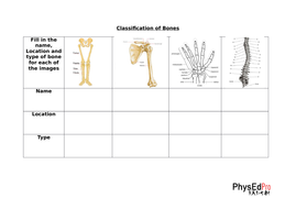 gcse pe skeleton skeletal system unit of work worksheet powerpoint exam questions. Black Bedroom Furniture Sets. Home Design Ideas